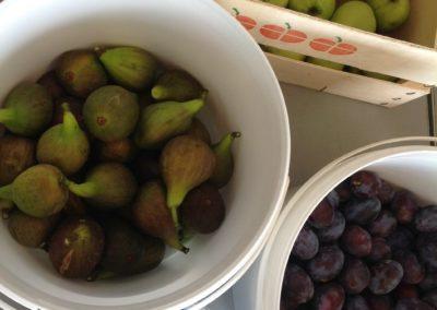 Friskplukkede æbler, figner, blommer og brombær